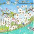 井の頭公園の桜,2