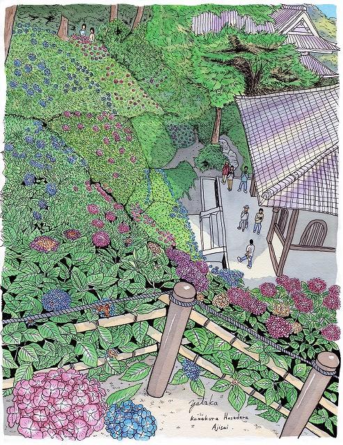 長谷寺の紫陽花(鎌倉)