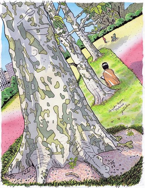 新宿御苑のプラタナス