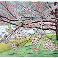 2014桜(ソメイヨシノ)