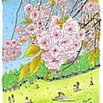 八重桜  (一葉)
